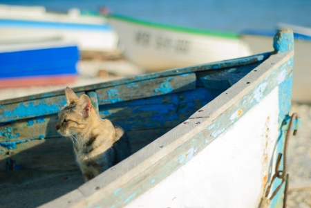 Cat on old boat looking towards to the sea