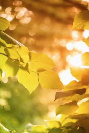Autumn forest bathing in sunlight Stock Photo