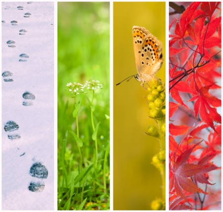 Four seasons collage Winter, Spring, Summer, Autumn