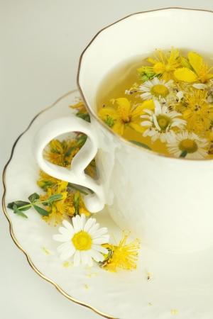 Herbal chamomile and tutsan  St  John Stock Photo - 21638667