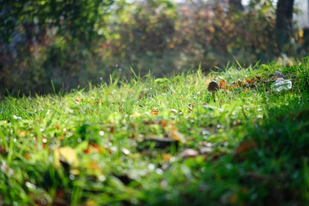 Single mushroom on autumn meadow photo