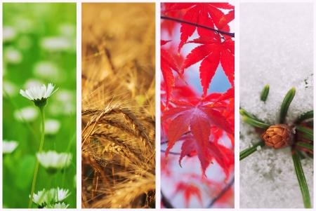 Quatre saisons collage Banque d'images - 22924212