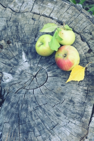 Autumn nature  Fall fruit on wood  photo