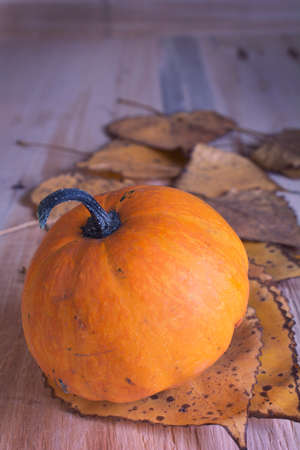 Ripe pumpkin on table. photo