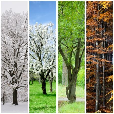 Four seasons collage: Winter, Spring, Summer, Autumn. photo