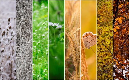 season: Four seasons collage: Winter, Spring, Summer, Autumn.
