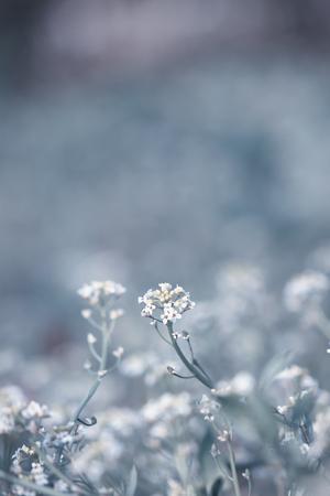 dof: Beautiful tender wildflowers in morning sun light