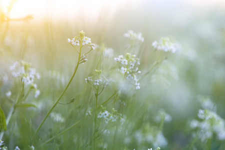 Tiny Spring flower and morning dew with shallow depth and sunshine