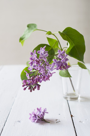 Spring purple lilac in vase on a white table