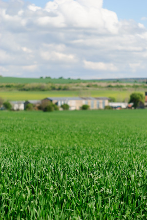 Green wheat field with agricultural buildings in the background. Focus on the foreground.