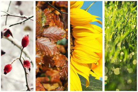 Four seasons collage: Spring, Summer, Autumn, Winter Foto de archivo