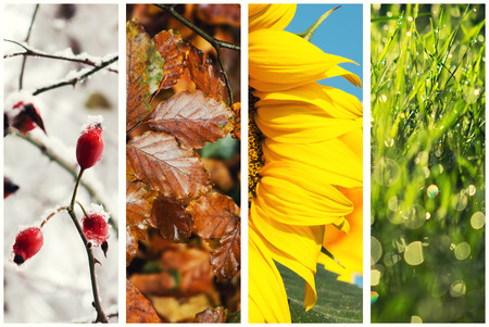 Four seasons collage: Spring, Summer, Autumn, Winter photo