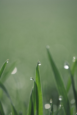 Water drops on green grass Stock Photo