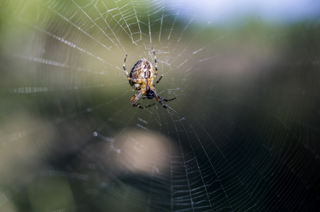 The spider in the center of the web eats the victim