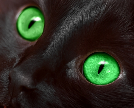 dark eyes: Muzzle closeup of black cat with green eyes