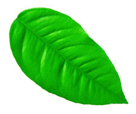 Close-up of green leaf photo