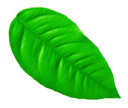 Close-up of green leaf Stock Photo - 9986582