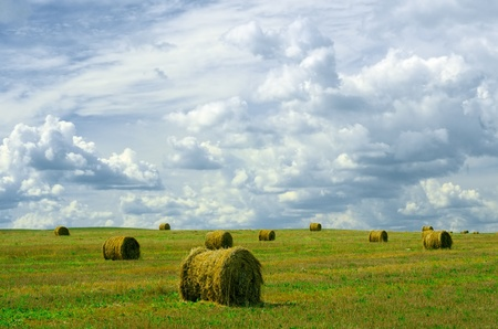 Landscape photo of rolled hay on a field photo