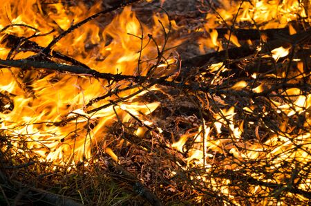 stock photography: Wood in flame in forest stock photography