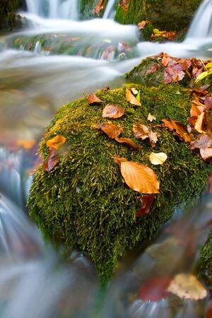 Autumn foliage on green stone near stream