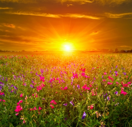 Nice summer sunset in steppe Stock Photo
