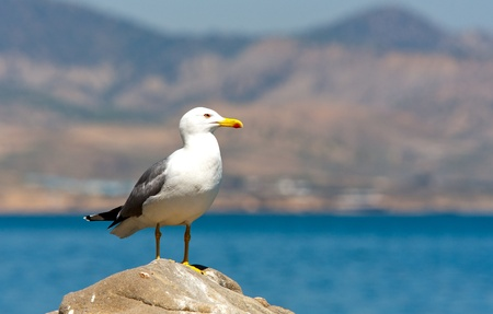 seagull on stone in sea photo