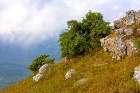 green tree on mountains slope Stock Photo