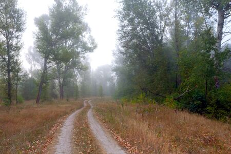 Countryside road in morning foggy forest photo