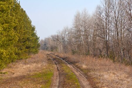 Countryside road in forest Stock Photo - 13764417