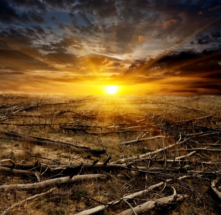 barren: sunset over old dead trees on meadow Stock Photo