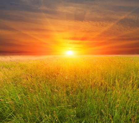 boundless: Nice sunset over field in steppe