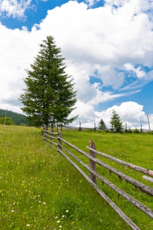 Mountain meadow with wooden fence