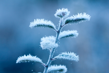 frosted brunch in winter time Stock Photo - 13762395