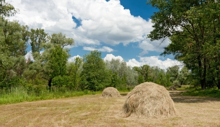 haymaking: Nice forest meadow with haystacks Stock Photo