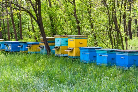 Apiary in green forest in summer Stock Photo