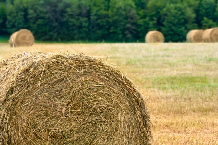 rebelling: haystacks on the filed