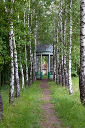 nice birch alley to summerhouse photo