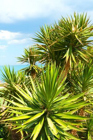 palm tree closeaup on sea background photo