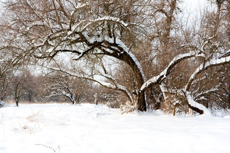 wintry landscape: Snowy tree in park in winter time Stock Photo