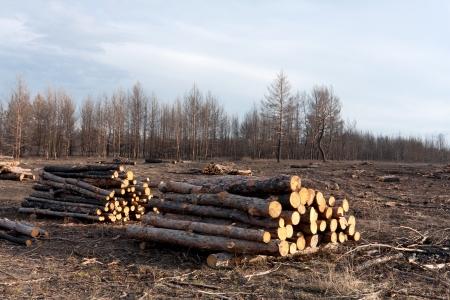 ontbossing in oud bos Stockfoto