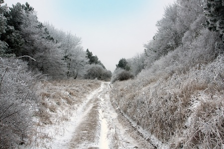 dirty road in forest in winter time photo