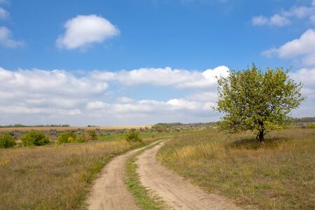 contryside: Contryside road in steppe in nice autumn day