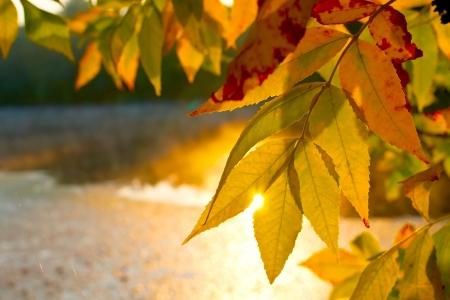 leafage: Nice autumn leafage