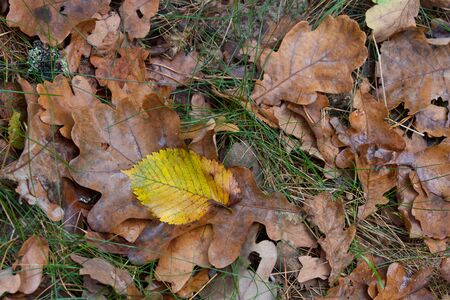 leafage: Autumn leafage abstract natural background Stock Photo