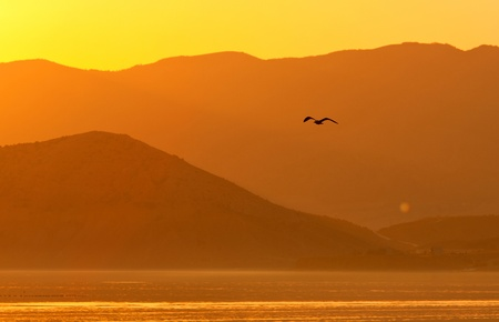 seagul flying on evening mountains background photo