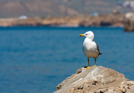 Nice seagull on stone on sea  photo
