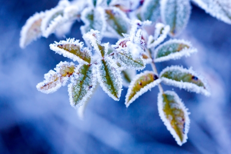 frost covered: brunch in frost - very shallow focus