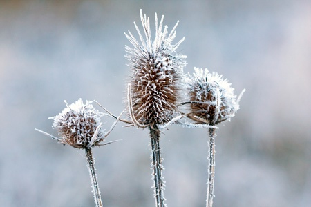 frozen plants - macro shoot with shallow focus