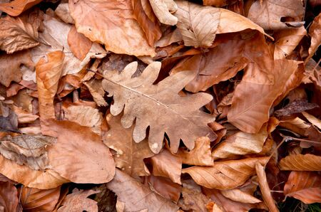 leafage: abstract natural background with autumn leafage