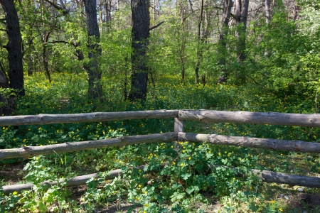 wooden fence in deep forest photo